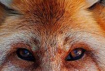 Animals / by Junior Cardoso