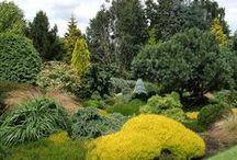 Gardens Conifers Ogrody / Ogrody zimozielone, jałowce, jodły, sosny, świerki.