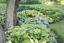 Garden. Flower Border. Shade Plant Ideas. Rabaty kwiatowe. Rośliny cieniolubne. Ogród. / Beautiful garden beds and borders. Shade garden with hosta.