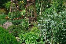 Garden (Veggie's & Herbs) / Veggie Garden Design