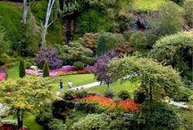 Garden (Landscape Design)