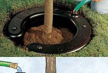 Garden (Tips for Pest Control & Other Idea's) / Old Fashioned Idea's