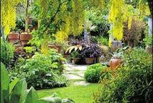 Garden (Tropical)