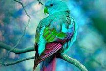 Turquoise/Green/Blue/Aqua/Nature