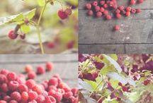 Gardening / by Elizabeth Harper
