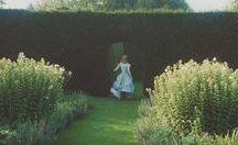 Disney | Alice in wonderland