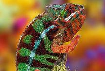 Colorfull nature / Colorfull nature, colorfull animals, colorfull plants