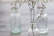 flora / flores bonitas, bonitas!