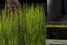 Dream garden -modern / Ideas and inspiration.