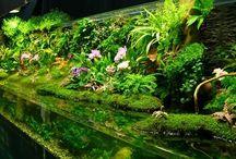 Riparium / Palundarium / I want this. In my house. To look amazing.