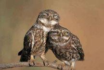Owls / Uilen