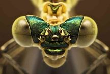 Macro-photos (insects and small creatures) / Beautiful magnified pictures of insects and critters! / by Terri Priest