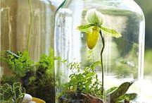 Fairy Garden / Mini terrariums.