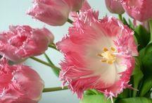 Interiør-tulipaner / Interiør-tulipaner er et knippe utvalgte tulipaner med et helt spesielt vakkert utseende. De blir som et interiør-element, derav navnet Interiør-tulipaner