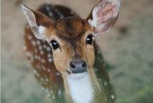Stunning Animals