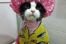 Cats Cats Cats 3