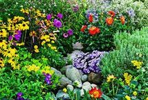 A Yard of Dreams / My Pinterest Garden of Plants ~  To plant is to believe in tomorrow.    / by Christine Sinclair