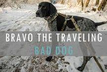 BRAVO THE TRAVELING DOG / https://www.instagram.com/paigeramseyphoto/