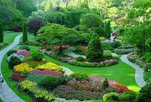 Garden of Eden / Gardens, backyarsd, flowers