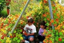 Garden for kids / by Katy Hamilton