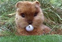 Golf / chasing your balls around for fun!  :) / by Randy Watson