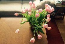 Spring sensations / Vårens små gleder.