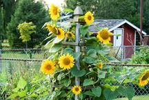 Gardening / by Stacey Runke