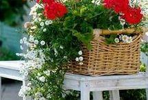 Todo  flores
