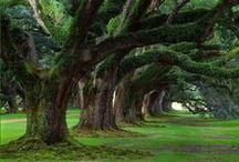 Garden/forest / by Claire Wheeler