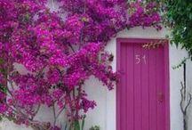 color - FUCHSIA / by Bonnie Short