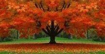 Trees! / The beauty of trees.