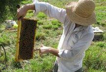 Bee-utiful world