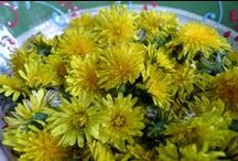 Dandelions / Food and drink from foraged dandelions.