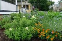 Edible Landscaping in Front Yard / Design and Plants used in front Yard Edible Landscape