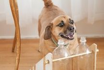 Pets: Tips, Tricks and Fun! / Tips and tricks for keeping the furry members of your household, happy, safe, and healthy.