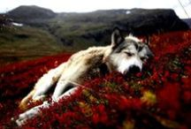 Nature fauna/flora