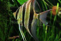 Orinoco aqua / My fish