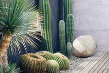 Home - Garden / Flowers garden wild green creative black wood cactus