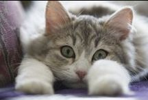 Katzen / wunderschöne Katzenfotografien und Kalender