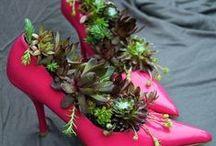 I'm Dreaming of a Succulents
