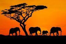 Africa. /
