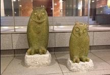 Owls / by Dwayne Hearn