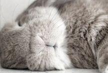 Cute Bunny / Bunnies, rabbits, konijntjes, Kaninchen, i just love 'em.