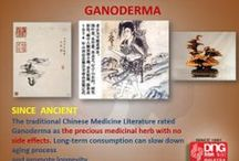 Ganoderma / Ganoderma is traditionally used to improve the body's healing ability, maintain a healthy body and promote longevity.