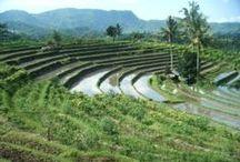 Bali / Voyage de 15 jours à Bali