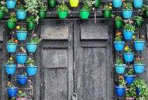 giardinaggio / piante fiori giardini natura