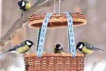 bird feeders, bath and houses