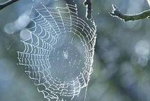 ragni e ragnatele