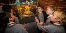 Perth Mint Exhibition / Discover Western Australia's golden heritage - from huge gold deposits found during the 19th century to modern-day minting of gold and other precious metal coins.