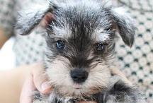 Cute Puppies / by Joan Schroeder